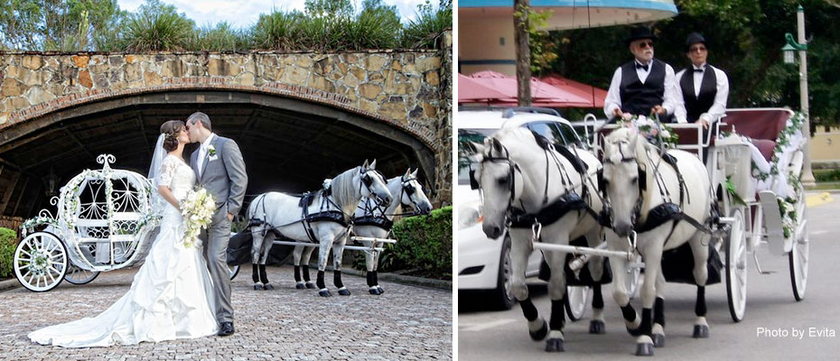 Horse Drawn Wedding Carriages