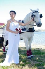 wedding-horse-carriage2